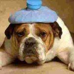 hangover_dog1