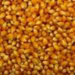 Popcorn_raw