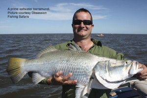 big-barramundi