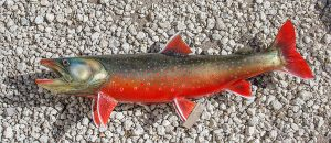 Artic Char takes well to farming.