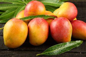 Mangos freshly picked from the tree.